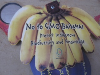 GMO-free bananas