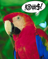 cheeky parrot 1 2